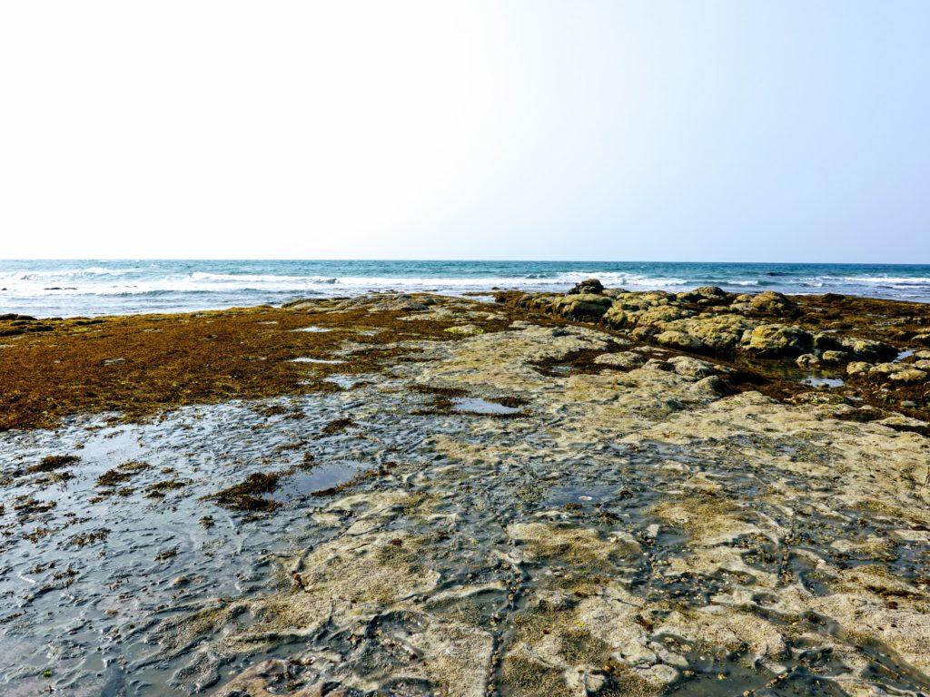夏井ヶ浜はまゆう公園の干潮時