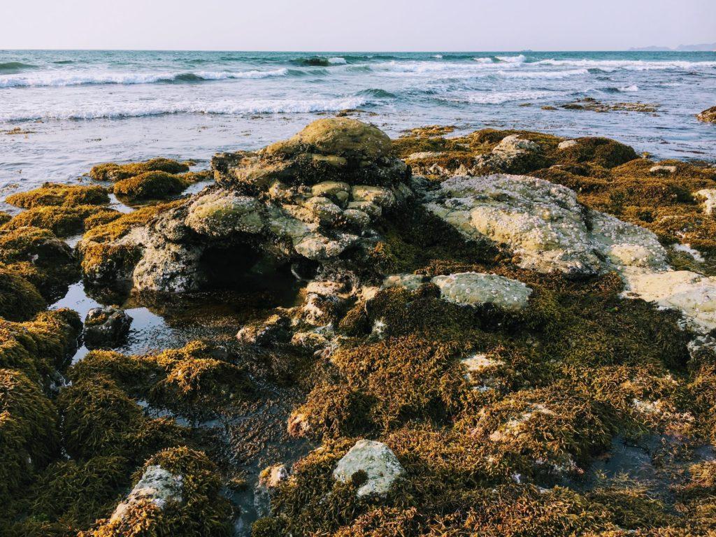 夏井ヶ浜はまゆう公園の岩場