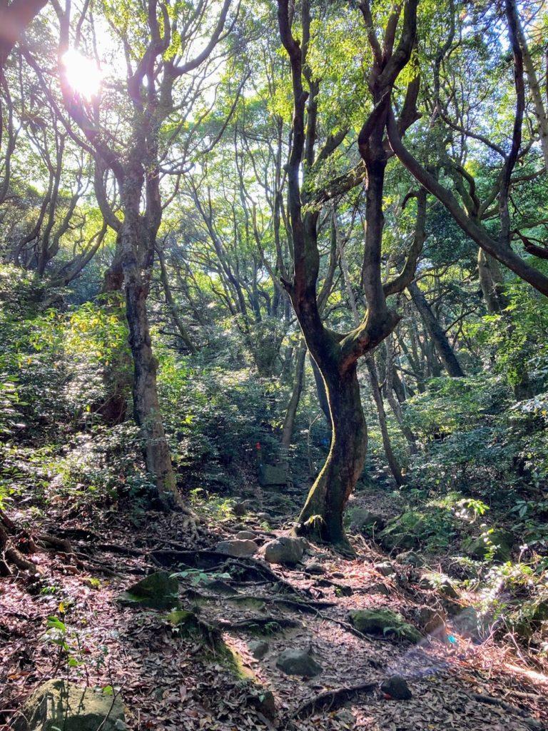 煌彩の森コース 森の中
