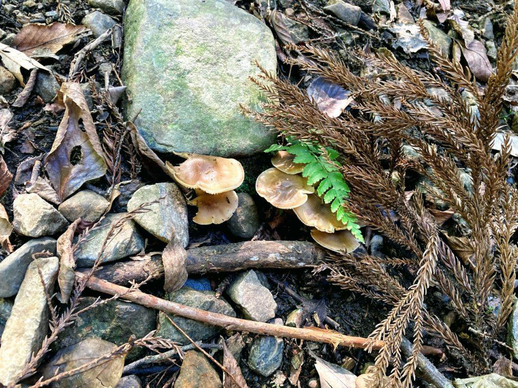 煌彩の森コースは自然がいっぱい、キノコ