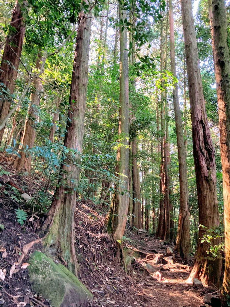 煌彩の森コース