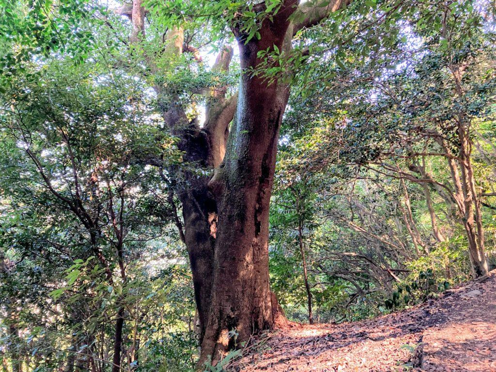 煌彩の森コース 大木