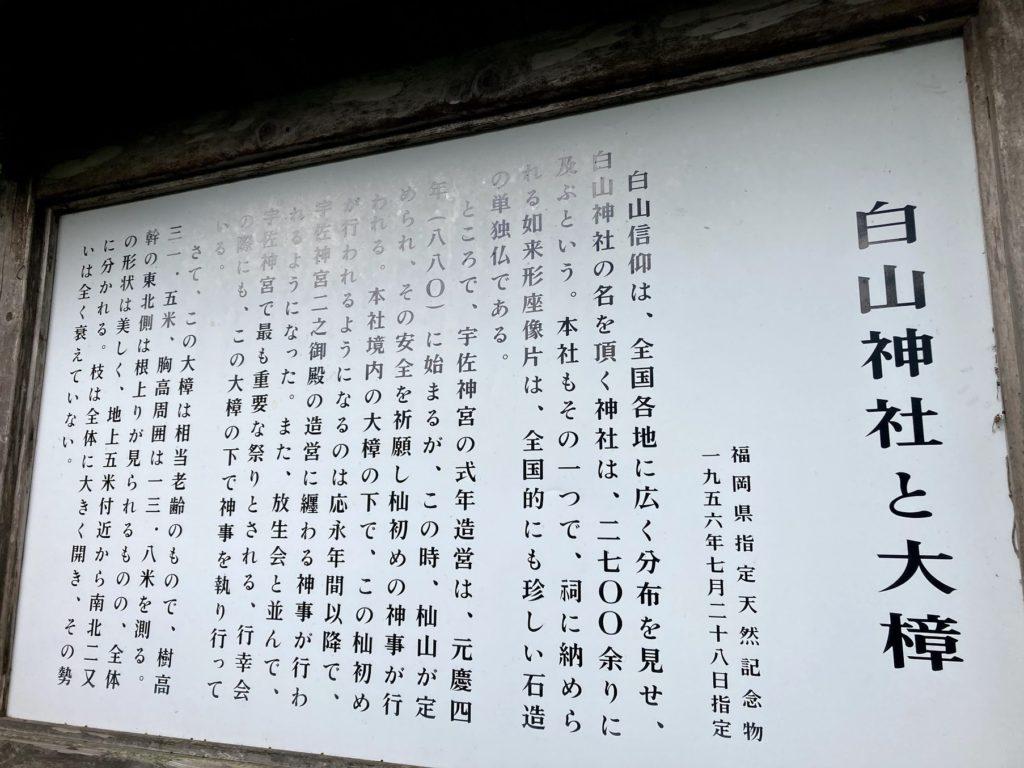 豊前市下川底の白山神社に行って大楠(クスノキ)を見ました